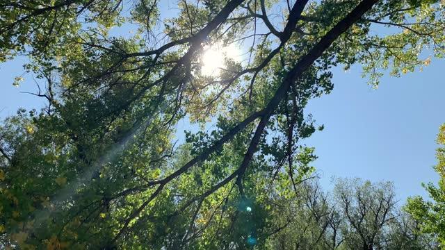vídeos de stock, filmes e b-roll de inspiração da natureza - árvore de folha caduca