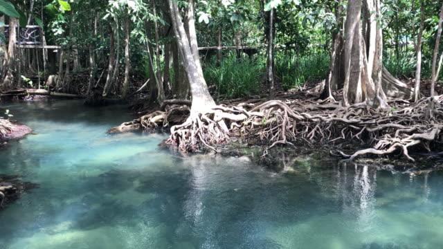 nature landscape pa phru tha pom khlong song nam karbi,thailand - krabi province stock videos & royalty-free footage