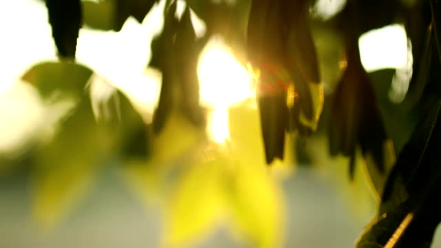 日光の自然葉の背景 - 郷愁点の映像素材/bロール