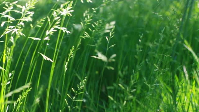 nature long grass           na  ba - dappled light stock videos and b-roll footage