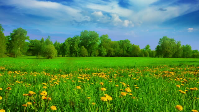 nature - meadow near forest - pasture stock videos & royalty-free footage