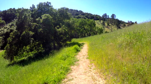 nature of north california - walkway stock videos and b-roll footage