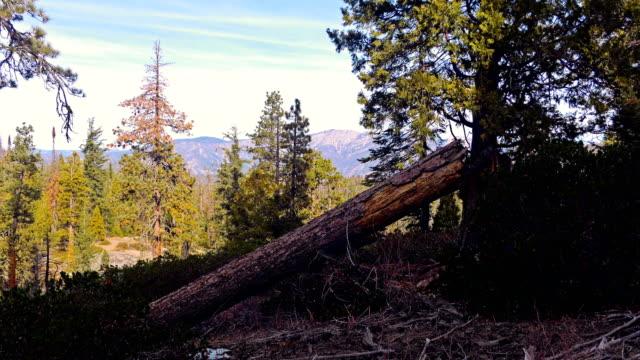 Nature of Sierra Nevada