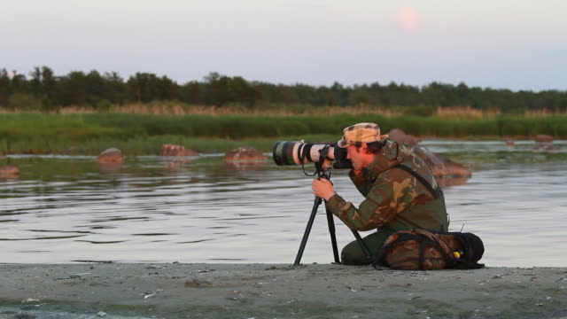 nature photographer working - telephoto lens stock videos and b-roll footage