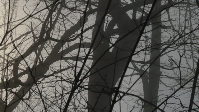vidéos et rushes de nature sun shinning through branches pan - arbre sans feuillage