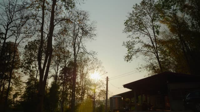 nature, sunrise shining through the trees in the natural forest. - crane shot stock videos & royalty-free footage