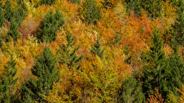 nature themed background of colorful trees in autumn - mgost stock videos and b-roll footage