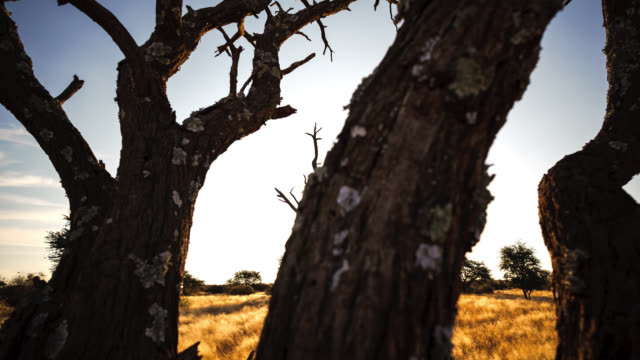 vídeos de stock, filmes e b-roll de nature timelapse - deserto de kalahari