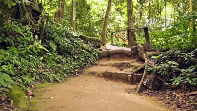 naturlehrpfad fußweg sicht durch tropischen regenwald, laos - kamerafahrt auf schienen stock-videos und b-roll-filmmaterial