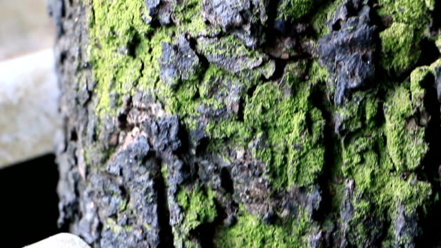 nature tree and trunk in daylight - mos stock videos & royalty-free footage