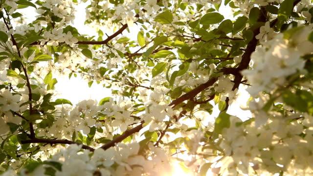 Natur Baum kleine Biene