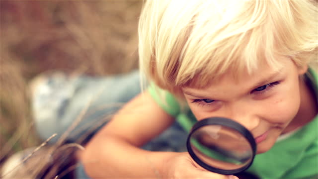 nature - magnifying glass stock videos & royalty-free footage