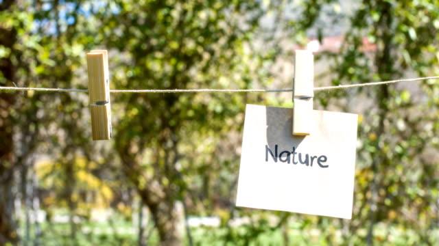 stockvideo's en b-roll-footage met natuur - wasknijper
