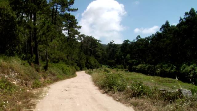 vidéos et rushes de nature walk - être perdu
