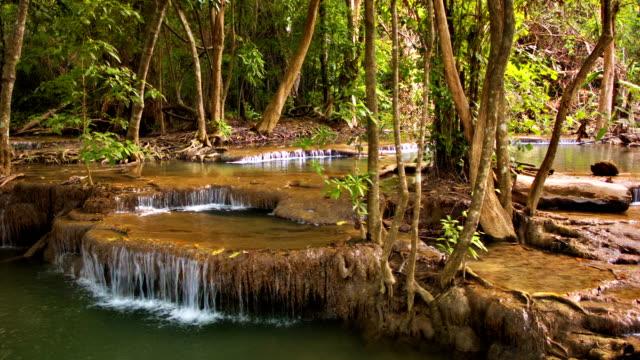 vídeos y material grabado en eventos de stock de la naturaleza, cascada - árbol tropical