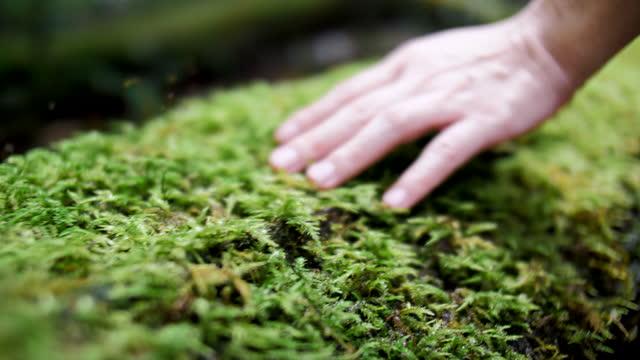 stockvideo's en b-roll-footage met natuur met eerste indruk - mos plant