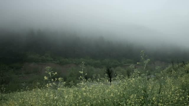 vídeos y material grabado en eventos de stock de naturaleza, la madre naturaleza - cabo verde