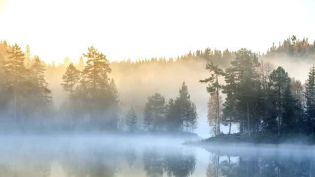 Nature-scape Cinemagraphs - Foggy autumn morning in the forest