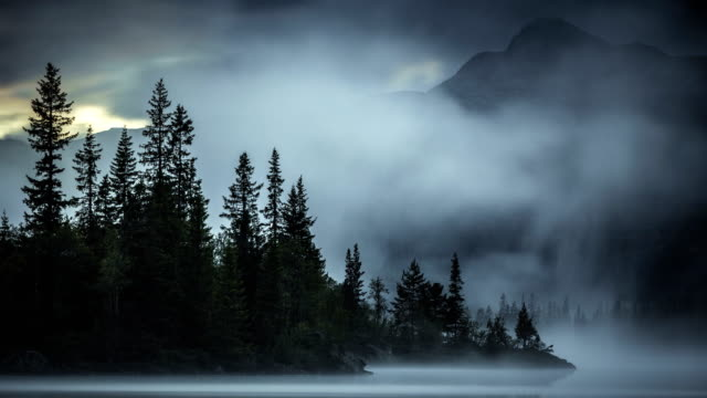 nature-scape cinemagraphs - foggy evening in the forest - lake stock videos & royalty-free footage