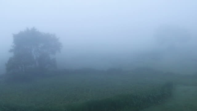 nature-scape cinemagraphs foggy hill - yuko yamada stock videos & royalty-free footage