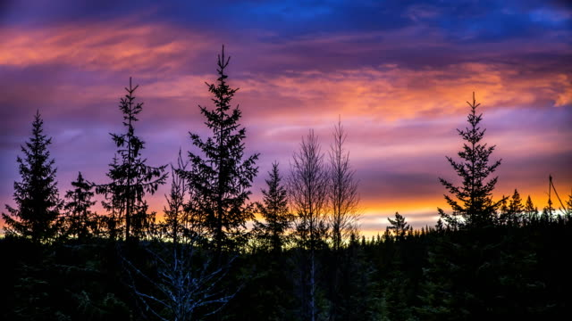 nature-scape cinemagraphs - sunrise in the forest - treetop stock videos & royalty-free footage