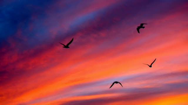 Nature-scape Cinemagraphs - Sunset and flying birds