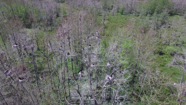 4k nature/wildlife/weather drone aerial video - bayou lafourche stock-videos und b-roll-filmmaterial