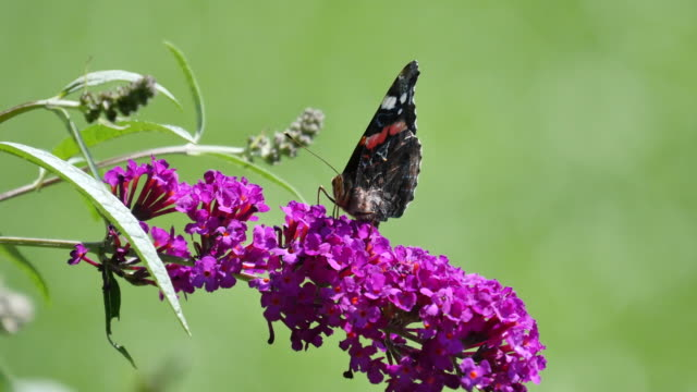 4k nature/wildlife/weather - butterfly stroke stock videos and b-roll footage