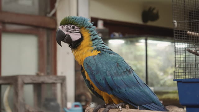 vídeos y material grabado en eventos de stock de 4k naturaleza/vida silvestre/el tiempo - grupo mediano de animales