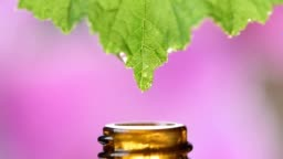 naturopathy with droplet of essence falling down from leaf of medicinal plant