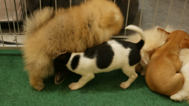 Naughtily puppy playing together