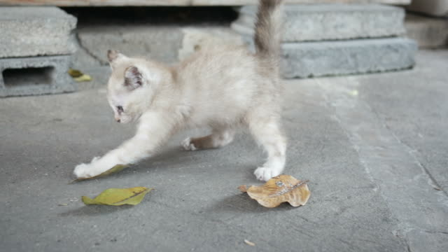 naughty kitten , jumping