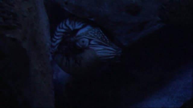nautilus - invertebrate stock videos & royalty-free footage