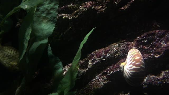 nautilus - spiral stock videos & royalty-free footage