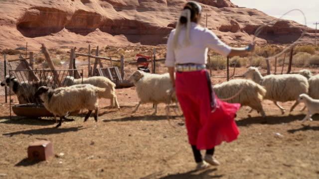 vídeos de stock, filmes e b-roll de uma adolescente navajo em uma caneta de ovelha roping um jovem cordeiro - só uma adolescente menina