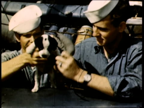 ms navy men putting miniature life jacket on their ship mascot puppy / united kingdom - marine stock-videos und b-roll-filmmaterial