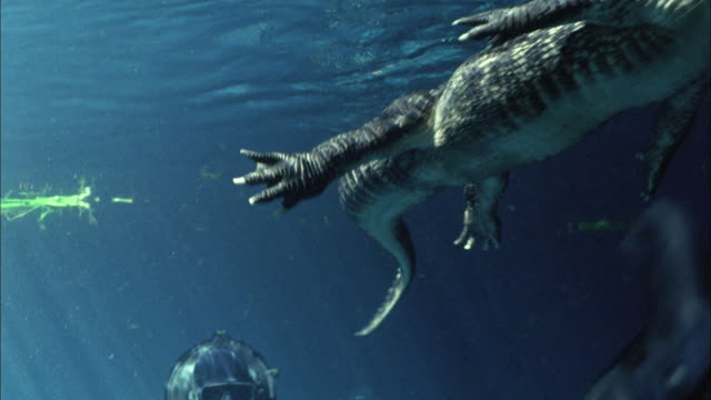 MS, Navy seal soldiers holding rifles swimming underwater past crocodile, USA