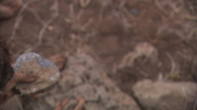 stockvideo's en b-roll-footage met a neanderthal pounds rocks in his hands. - prehistorische mens