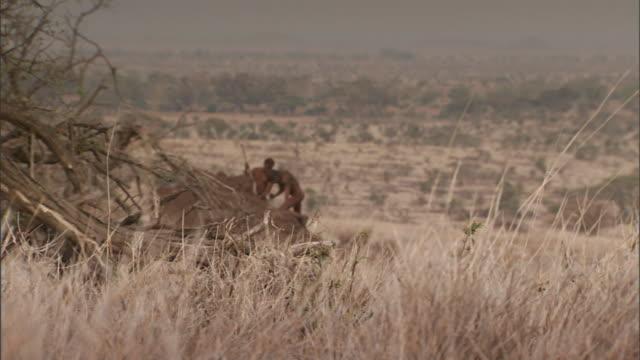 stockvideo's en b-roll-footage met neanderthals dig dirt with sticks and primitive tools. - prehistorische mens