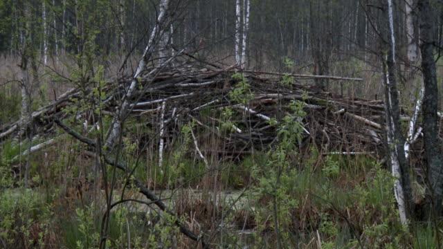 near beaver home - nido di animale video stock e b–roll