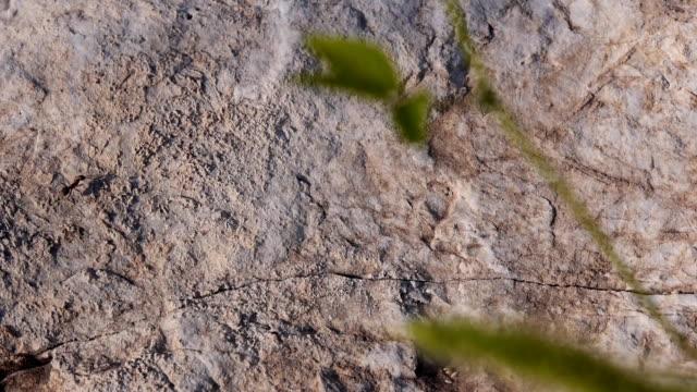 アリのクロールのビートの近く
