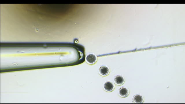 macro needle and cells with researcher preparing to extract material / united states - cloning stock videos and b-roll footage