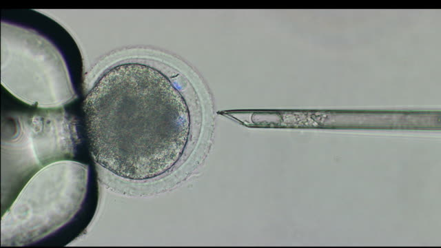 vidéos et rushes de macro needle extracting cells from an egg on high resolution / united states - cellule