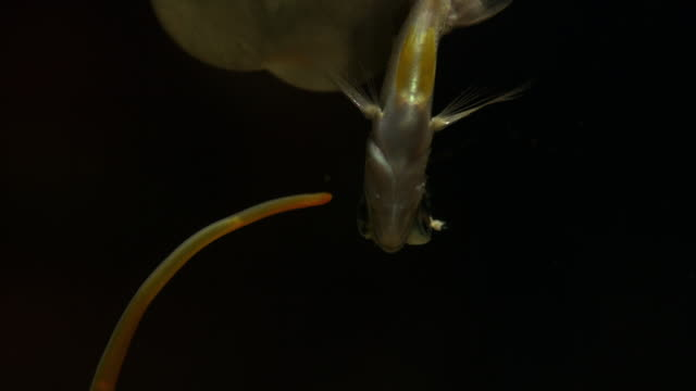 a needle piercing a fish in slow motion - killing stock videos & royalty-free footage