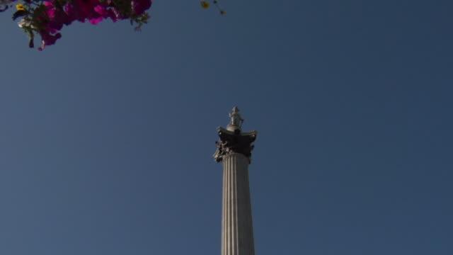 la ms nelson's column/ zo la ws column with flowering tree/ london, england - nelson's column stock videos & royalty-free footage