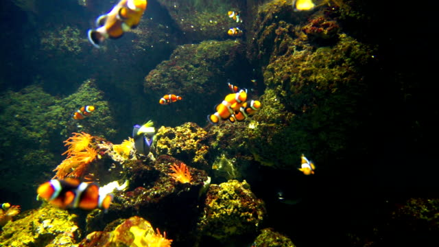 nemo & tropical fish on coral reef in aquarium - depth marker stock videos & royalty-free footage