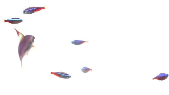 Neon poisson nage sur fond blanc