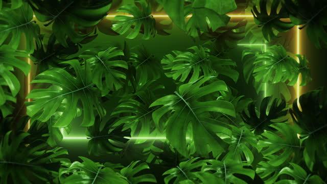 vídeos de stock, filmes e b-roll de folhas de palmeira neon monstera,conceito para banner - tropical