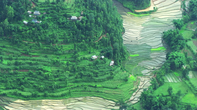 Nepal : Rice field with home