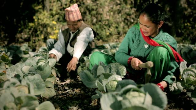 nepalese farmer couple in their farm. - farmer stock videos & royalty-free footage